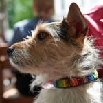 wire-haired-pet-dog-saferesidence.com
