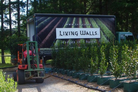 Backyard Ideas That Actually Increase Privacy and Security - Living Walls